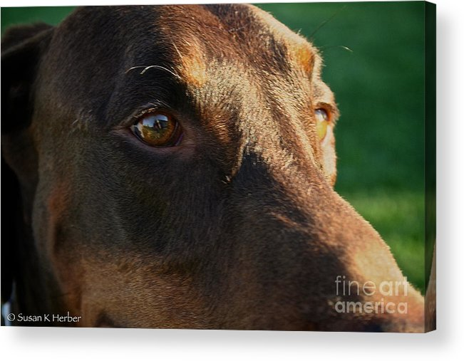 Mammal Acrylic Print featuring the photograph Redman by Susan Herber