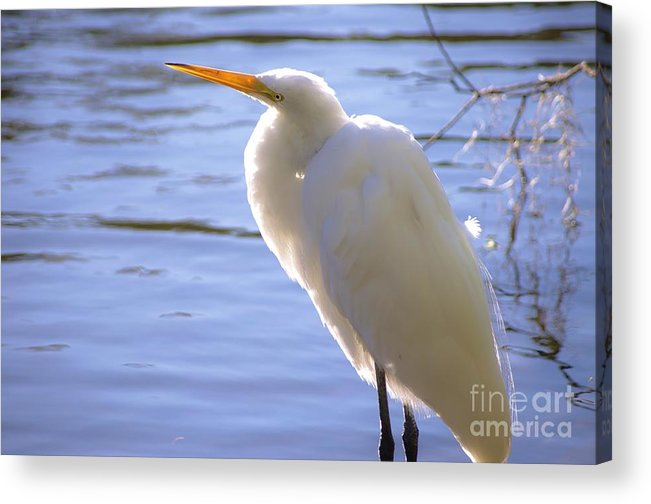 Egret Acrylic Print featuring the photograph Relaxing by Lynda Dawson-Youngclaus