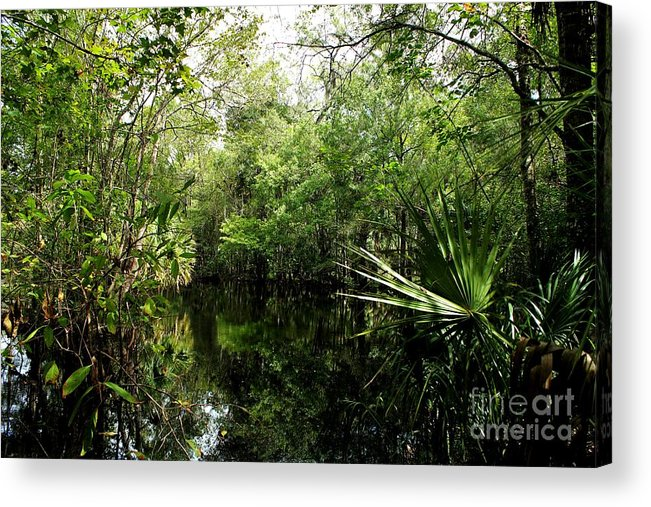 Hillsborough River Acrylic Print featuring the photograph Riverscape by Theresa Willingham