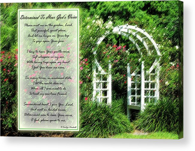 Rose Acrylic Print featuring the photograph Rose Garden by Carolyn Marshall