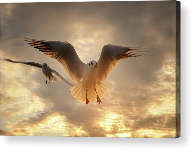 Horizontal Acrylic Print featuring the photograph Seagull by GilG Photographie
