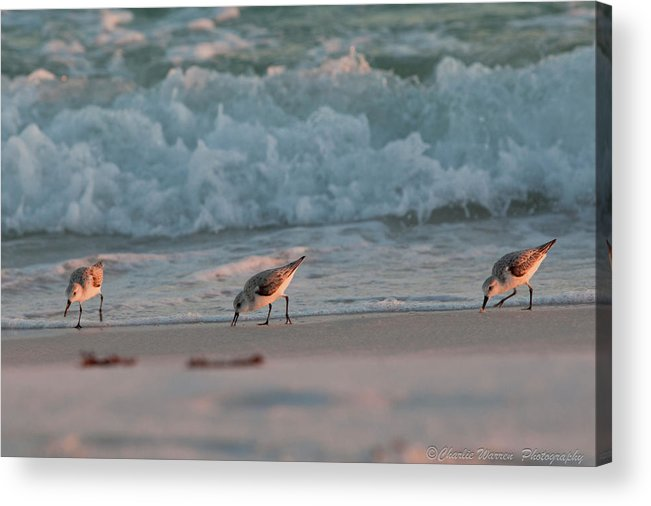Seaside Acrylic Print featuring the photograph Seaside Trio by Charles Warren