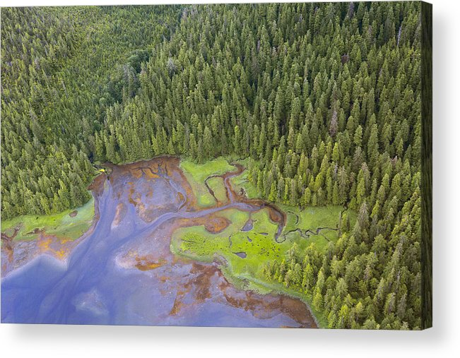 Misty Fjords Acrylic Print featuring the photograph Shoreline Misty Fjords National Park by Nathan Mccreery