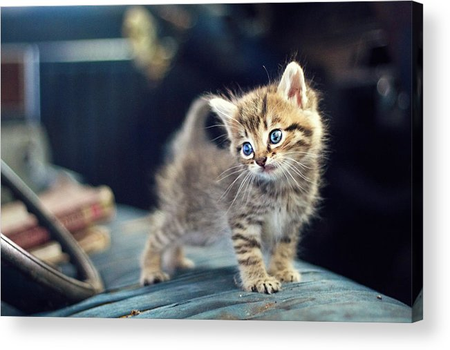 Horizontal Acrylic Print featuring the photograph Small Cute Kitten by Malcolm MacGregor