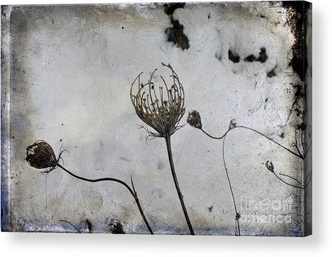 Snow Seeds Acrylic Print featuring the photograph Snow Seeds by Paul Grand