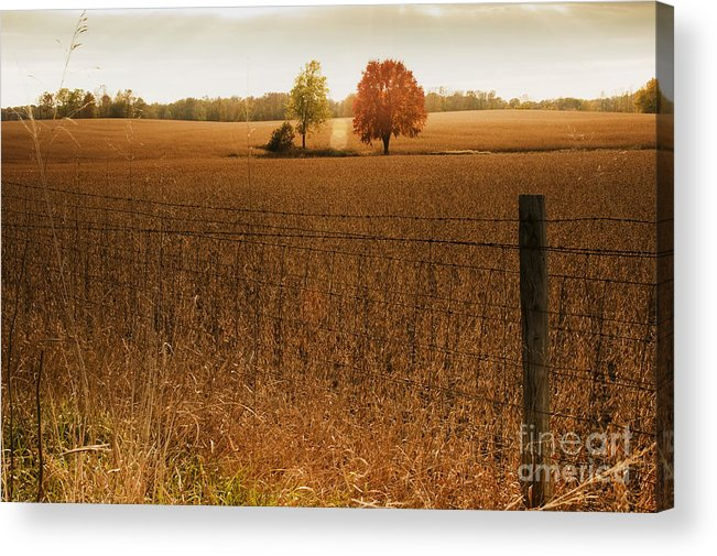 Photography Acrylic Print featuring the photograph Soy Glow by Kelly Morrow