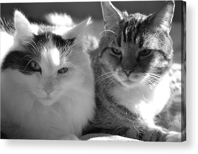 Cat Acrylic Print featuring the photograph Squeaker And Austin by Christine Tobolski