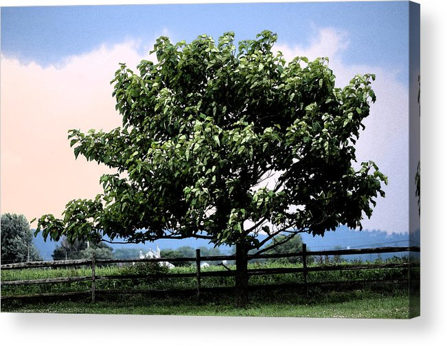 Tree Acrylic Print featuring the photograph Stand Alone by Transcended Illusions