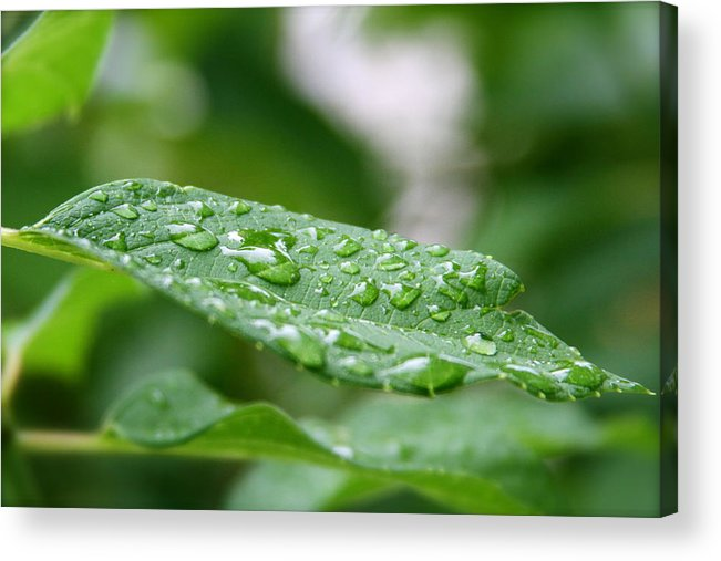 Acrylic Print featuring the photograph Summer Green by Mike Stouffer