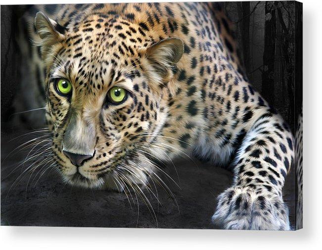 Sundari Acrylic Print featuring the digital art Sundari by Big Cat Rescue