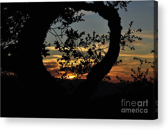 Sunset Acrylic Print featuring the photograph Sunset Through A Heart Of Branches by Kim Frank