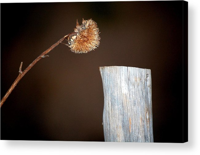 Dried Acrylic Print featuring the photograph Talk To Me by David Pike