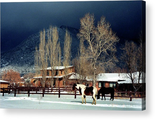 Horse Acrylic Print featuring the photograph Taos Typical by Ed Golden
