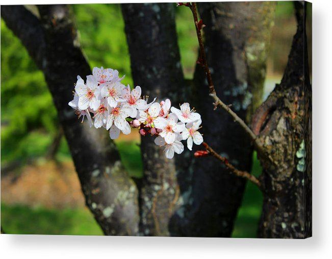 Flower Acrylic Print featuring the photograph The Beauty Stem by Bob Whitt