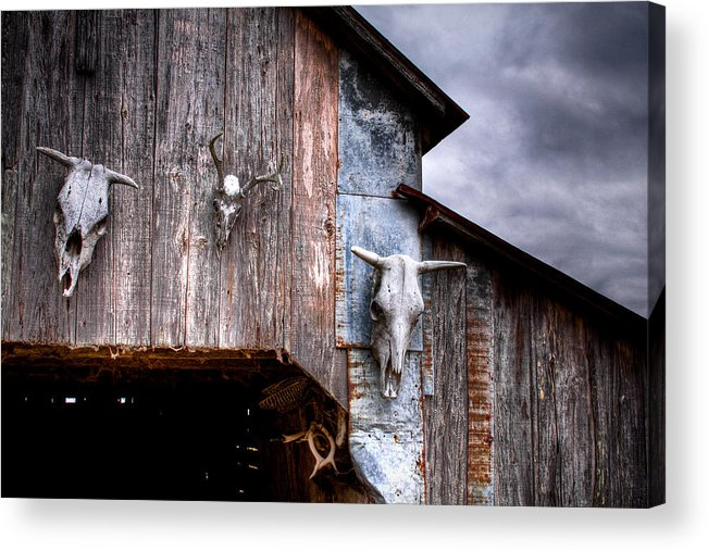 Cow Acrylic Print featuring the photograph The Broad Side Of A... by Pixel Perfect by Michael Moore