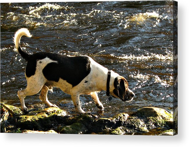 Hunting Acrylic Print featuring the photograph The Hunter by David Brown