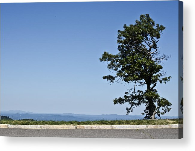 Landscape Acrylic Print featuring the photograph The Lonely Tree by Mark Stidham