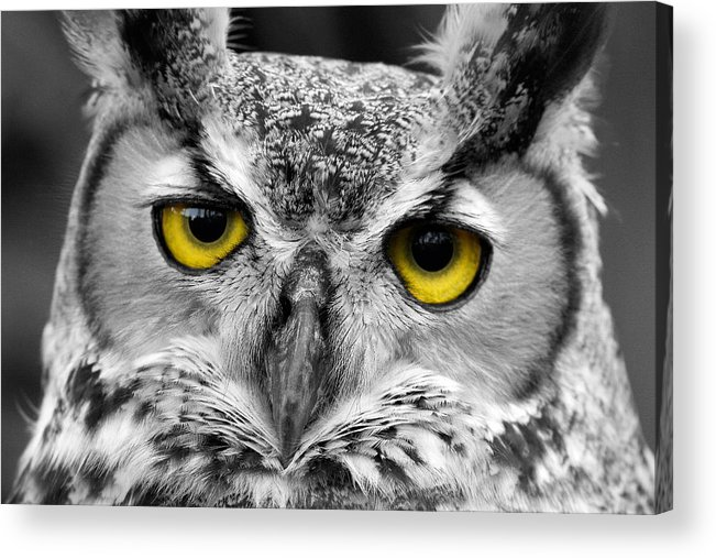 Owl Acrylic Print featuring the photograph The Look by Dennis Heald