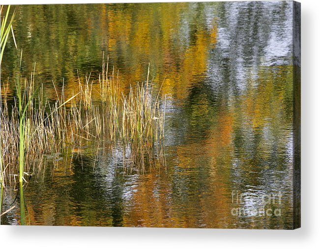 Photography Acrylic Print featuring the photograph The Pond Shallows by Sean Griffin