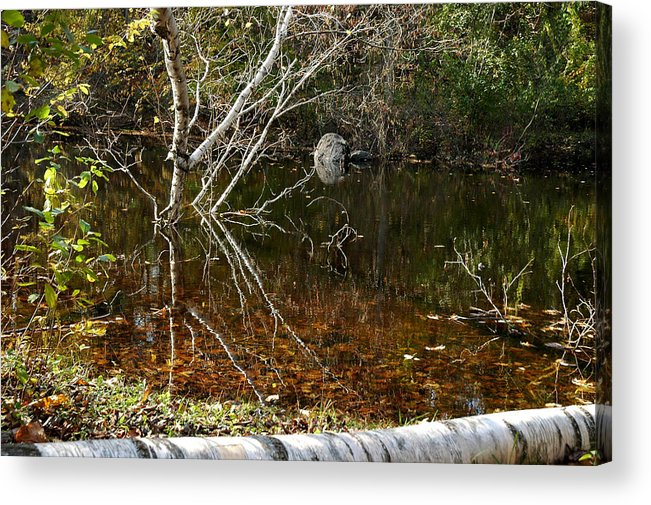 Usa Acrylic Print featuring the photograph Tree Reflections Stoney Creek by LeeAnn McLaneGoetz McLaneGoetzStudioLLCcom