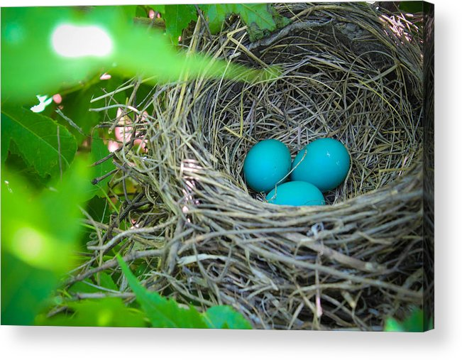Robin Acrylic Print featuring the photograph Triplets by Christy Patino