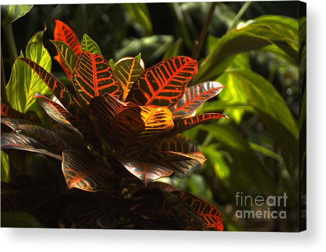 Leaves Acrylic Print featuring the photograph Tropical Leaves by Karl Voss