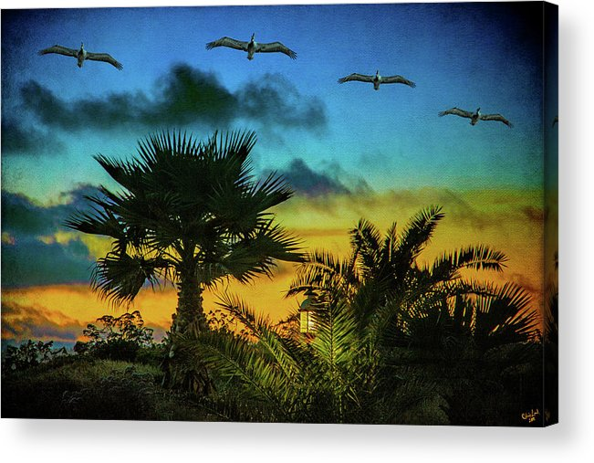 Sunset Acrylic Print featuring the photograph Tropical Sunset With Pelicans by Chris Lord