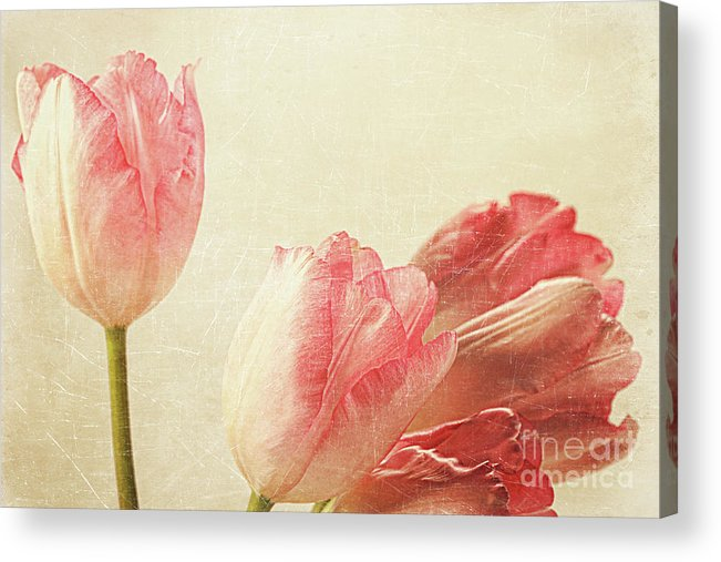 Abstract Acrylic Print featuring the photograph Tulips With Old Vintage Feeling by Sandra Cunningham