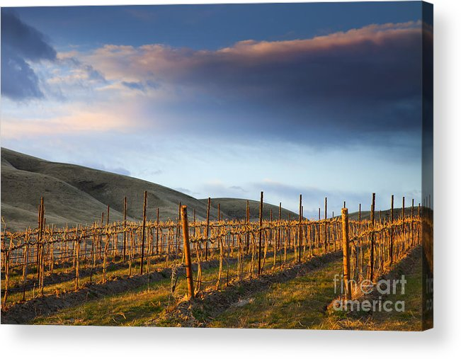 Vineyard Acrylic Print featuring the photograph Vineyard Storm by Mike Dawson