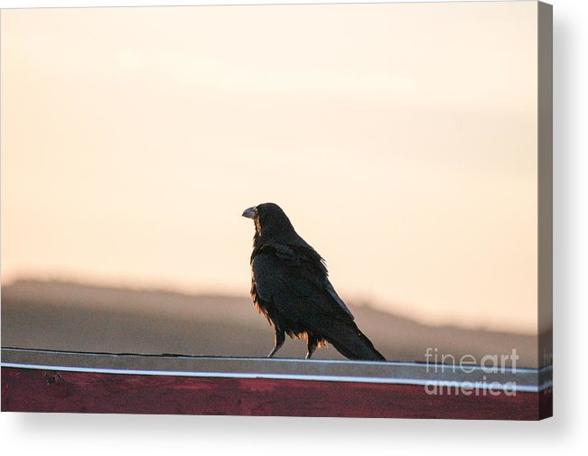 Landscape Acrylic Print featuring the photograph Waiting by Melissa Haley