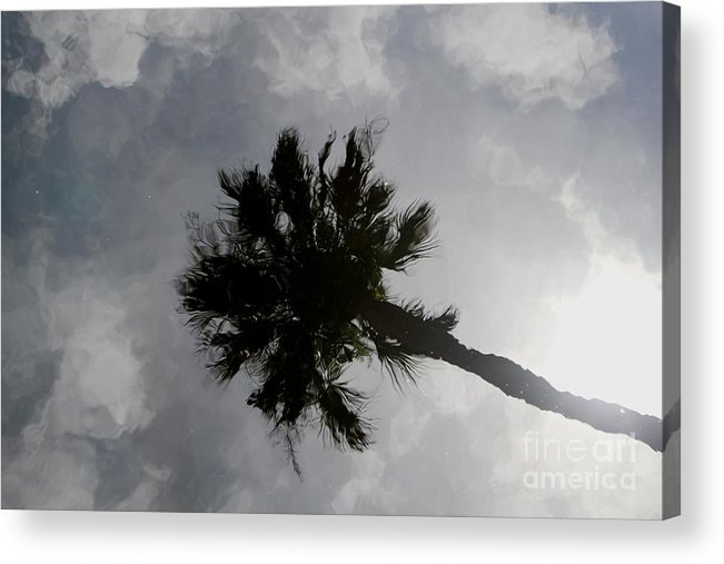 Cabbage Palm Acrylic Print featuring the photograph Water Color Palm by Theresa Willingham