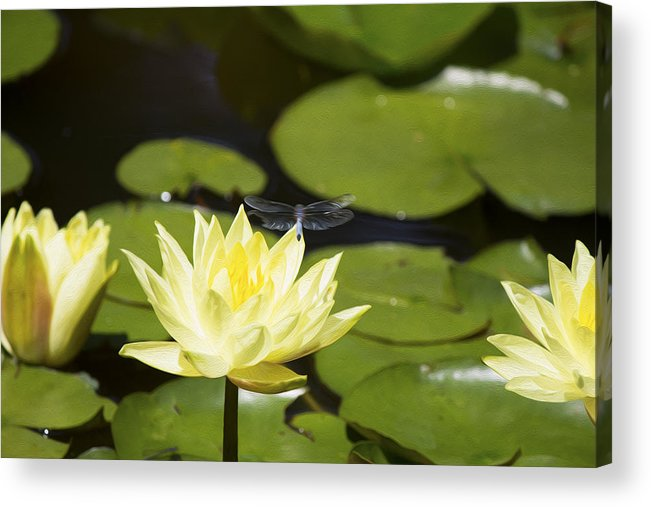 Water Lily Acrylic Print featuring the photograph Water Lily Dragonfly by Michel DesRoches