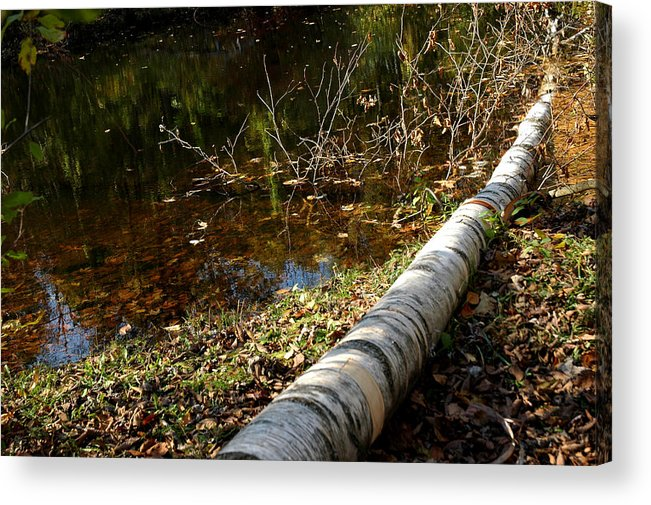 Usa Acrylic Print featuring the photograph Water Seeing by LeeAnn McLaneGoetz McLaneGoetzStudioLLCcom