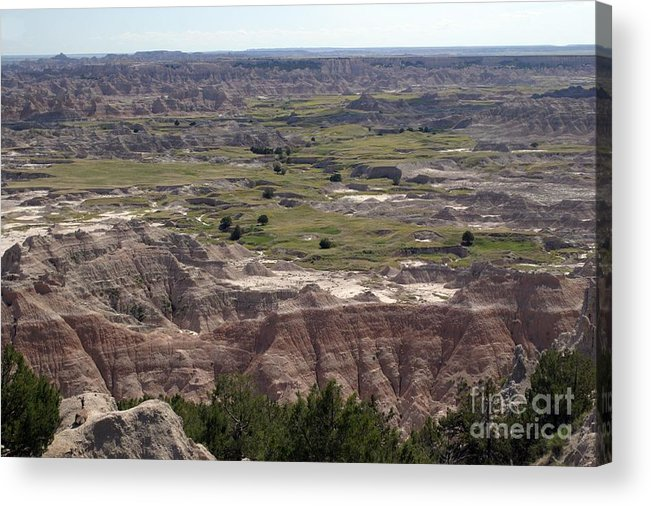 Badlands Acrylic Print featuring the photograph Wild Mountain Goat On Top Of The Badlands by Living Color Photography Lorraine Lynch