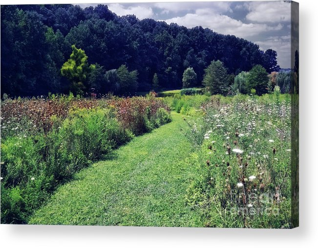 Garden Acrylic Print featuring the photograph Wildflower Field Evening by Susan Isakson
