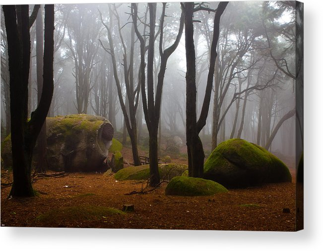 Forest Acrylic Print featuring the photograph Wonderland by Jorge Maia