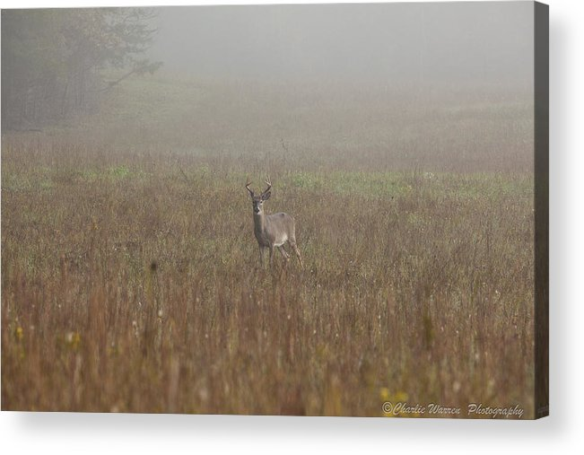 Deer Acrylic Print featuring the photograph Young Buck by Charles Warren