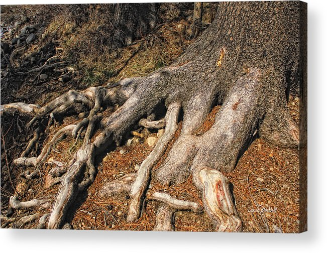 Tree Acrylic Print featuring the photograph Your Roots Are Showing by Donna Blackhall