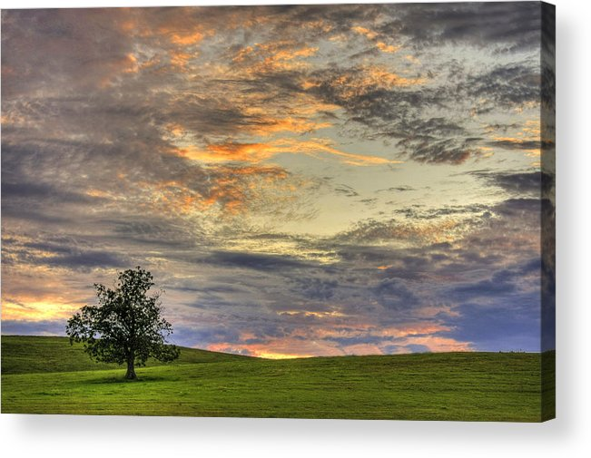 Horizontal Acrylic Print featuring the photograph Lonley Tree by Matt Champlin