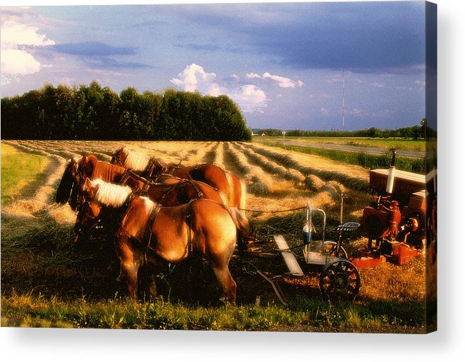 Harvest Acrylic Print featuring the photograph Amish Hay Rig by Roger Soule