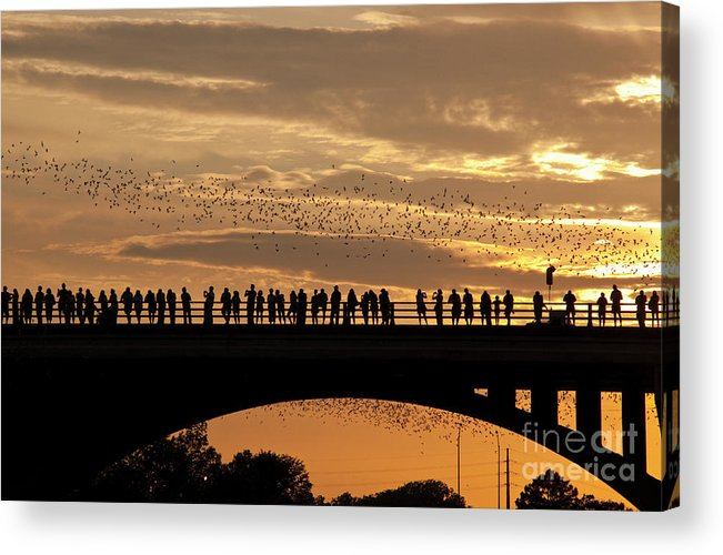 Things To Do In Austin Acrylic Print featuring the photograph Bats Take Flight From Their Home Under The Congress Avenue Bridge by Austin Welcome Center