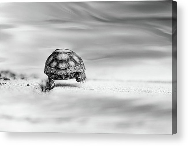 Fairytale Acrylic Print featuring the photograph Big Big World by Laura Fasulo