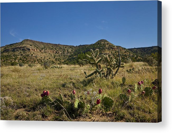 Black Mesa Acrylic Print featuring the pyrography Black Mesa Cacti by Charles Warren