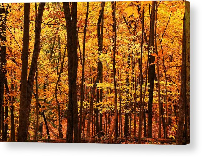 Autumn Acrylic Print featuring the photograph Delicious Autumn by Mitch Cat