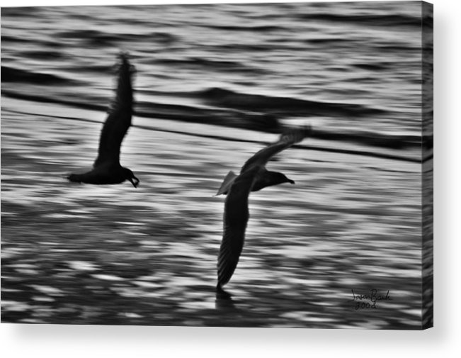 Seagull Acrylic Print featuring the photograph Dinner Debate by J D Banks