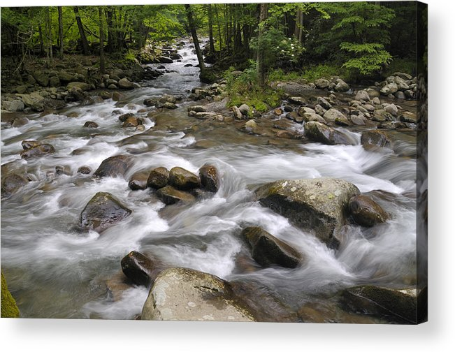Little Pigeon River Acrylic Print featuring the photograph Greenbrier In The Great Smoky Mountains by Darrell Young