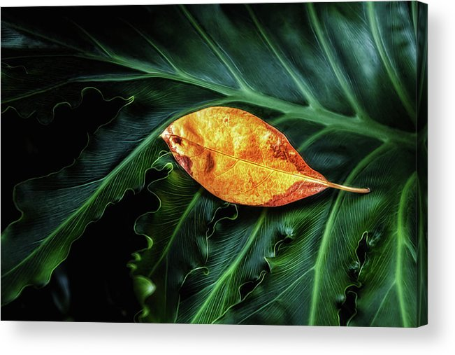 Art Acrylic Print featuring the photograph Life Cycle Still Life by Tom Mc Nemar