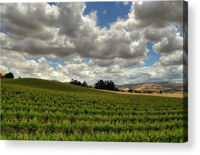 Vines Acrylic Print featuring the photograph Livermore Vineyard by Douglas Shier