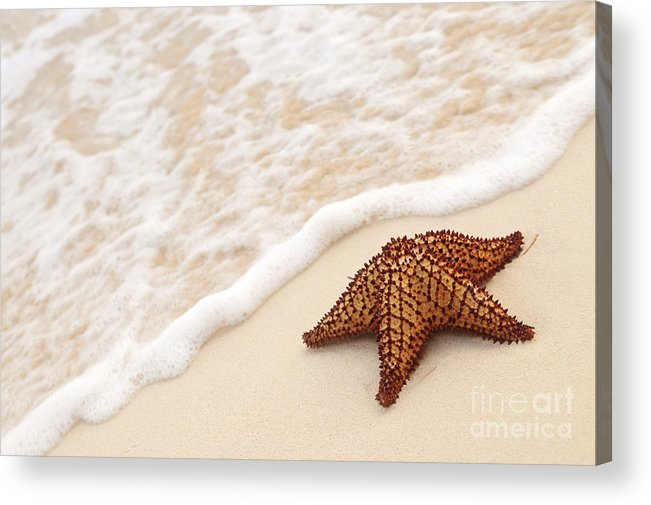 Starfish Acrylic Print featuring the photograph Starfish And Ocean Wave by Elena Elisseeva