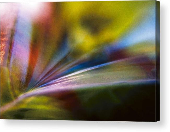 Tarragon Acrylic Print featuring the photograph Tarragon Tertiary by Shawn Young